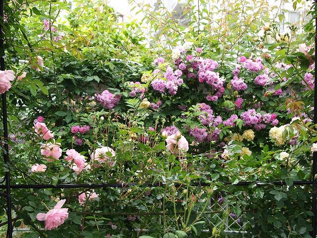 P5211860ゆうさんのお庭