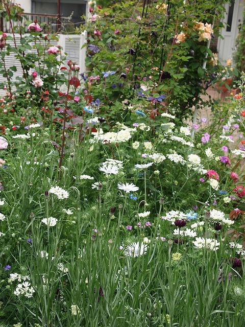 P5211862ゆうさんのお庭