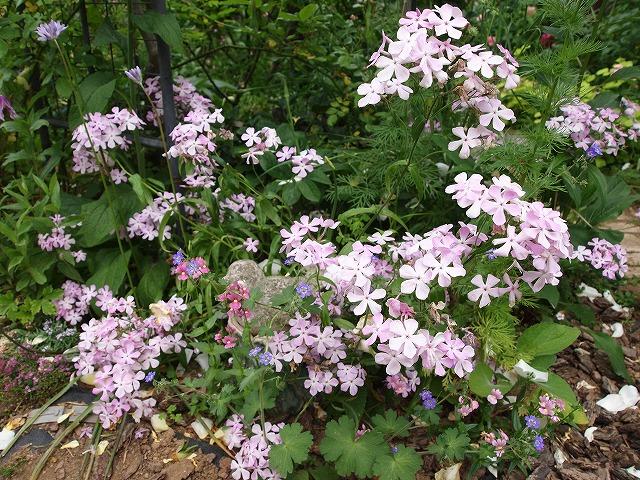 P5211863ゆうさんのお庭