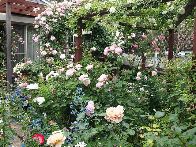P5211869ゆうさんのお庭