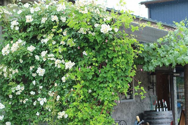 IMG_5032ローザンベリー多和田