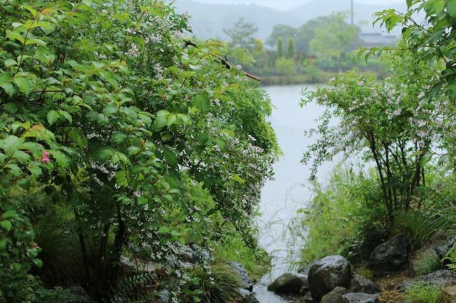 IMG_5111ローザンベリー多和田