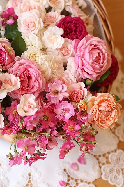 IMG_6992お庭のバラ