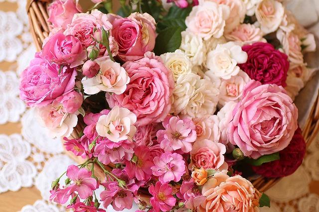 IMG_7001お庭のバラ