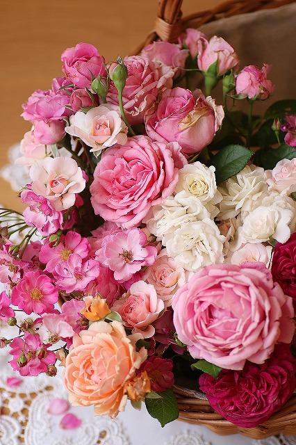IMG_6990お庭のバラ