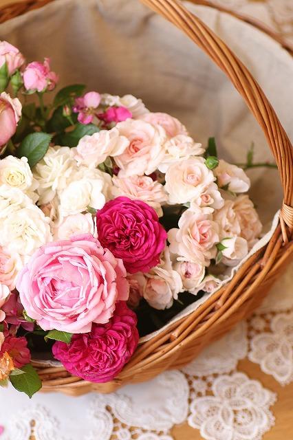 IMG_6979お庭のバラ