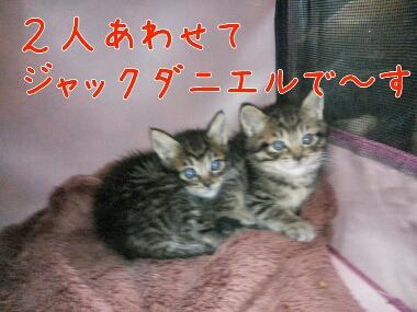 fc2_2014-04-17_10-15-51-041.jpg