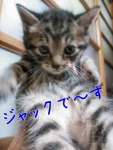 fc2_2014-04-17_10-16-26-331.jpg