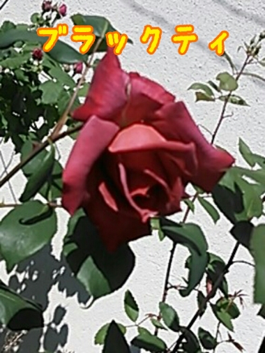 fc2_2014-05-07_13-21-22-581.jpg