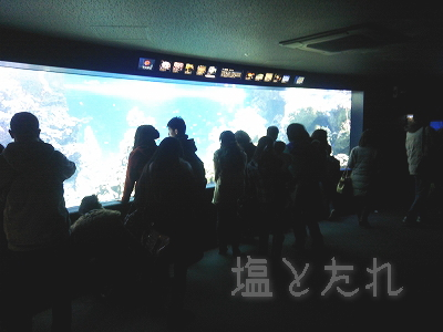 DSC_0074_20140223サンシャイン水族館