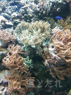 DSC_0076_20140223サンシャイン水族館