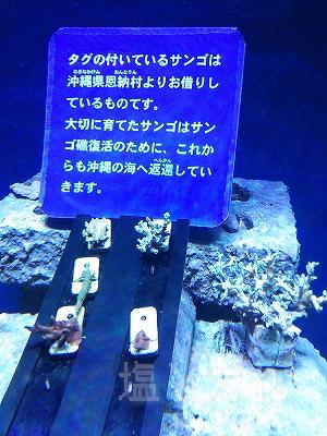 DSC_0080_20140223サンシャイン水族館