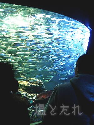 DSC_0082_20140223サンシャイン水族館