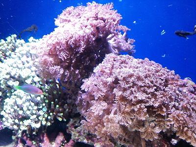 DSC_0096_20140223サンシャイン水族館