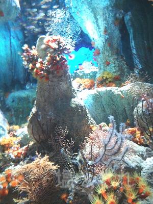 DSC_0108_20140223サンシャイン水族館