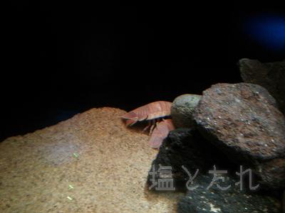 DSC_0112_20140223サンシャイン水族館