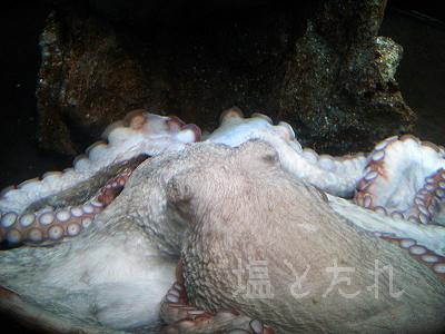 DSC_0113_20140223サンシャイン水族館