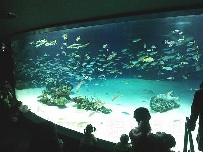 DSC_0115_20140223サンシャイン水族館