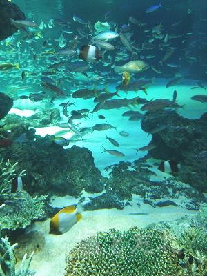 DSC_0120_20140223サンシャイン水族館