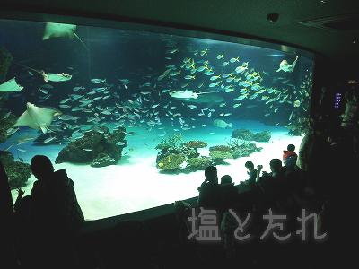 DSC_0126_20140223サンシャイン水族館