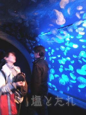 DSC_0128_20140223サンシャイン水族館