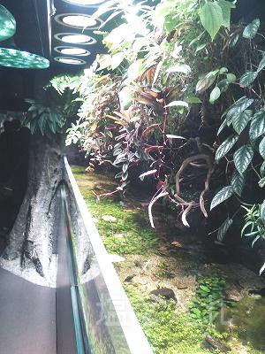 DSC_0154_20140223サンシャイン水族館