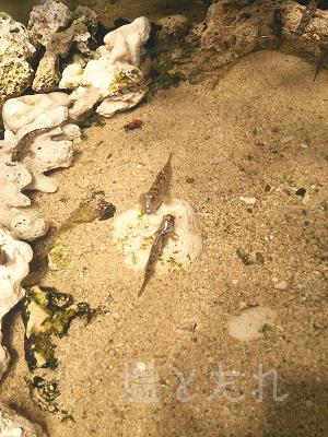 DSC_0170_20140223サンシャイン水族館