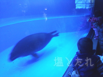 DSC_0186_20140223サンシャイン水族館