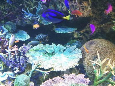 DSC_0193_20140223サンシャイン水族館