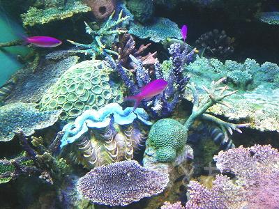 DSC_0194_20140223サンシャイン水族館