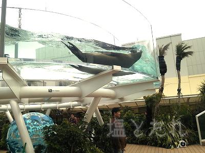 DSC_0202_20140223サンシャイン水族館