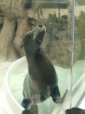 DSC_0208_20140223サンシャイン水族館