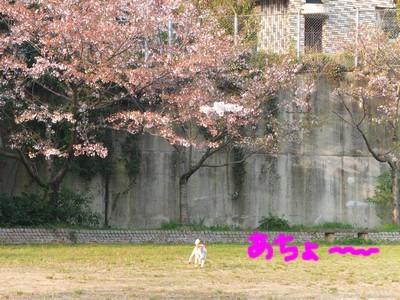 DSCF2149.jpg