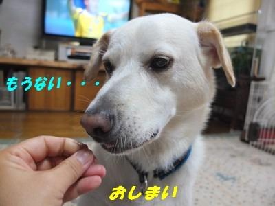 DSCF4603.jpg