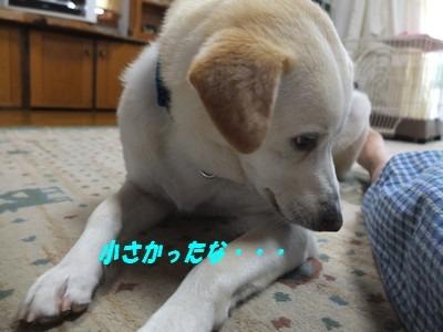 DSCF4606_20140710220617c84.jpg