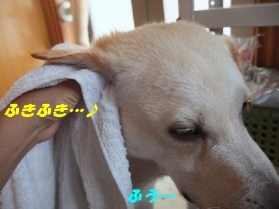 DSCF4813_2014072210001255a.jpg