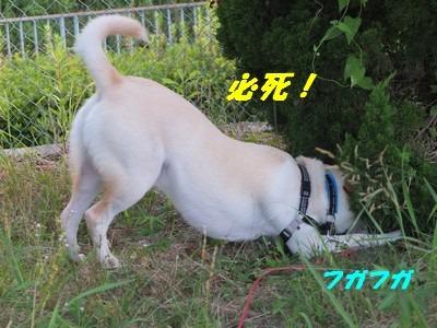 DSCF5114.jpg