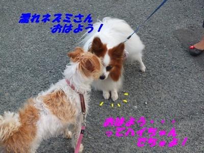 DSCF5140_20140727100327b1d.jpg