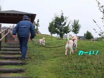 DSCF5411_20140805071118dae.jpg