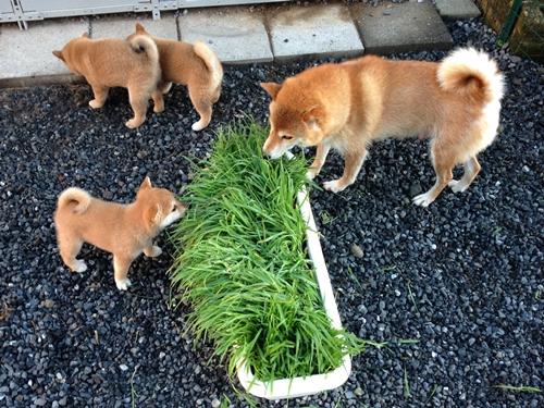 旅立った仔犬たち(2)