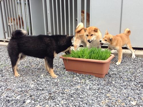 食べる草 守る