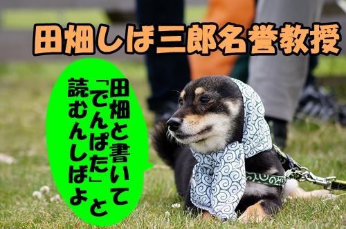 20140629-011.jpg