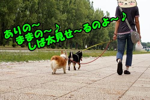 20140714-003.jpg