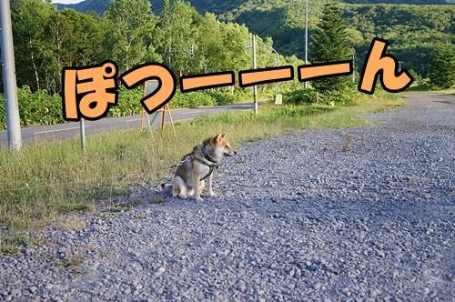 20140720-490.jpg