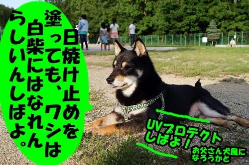 20140816-030.jpg