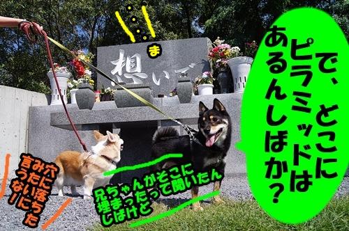 20140817-006-.jpg