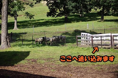20140906-220.jpg