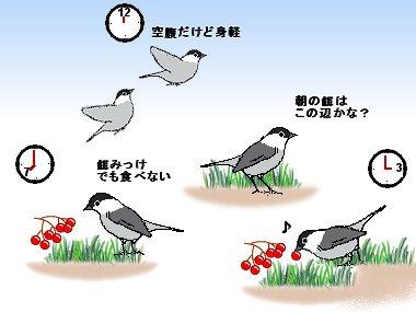 朝見つけて夕方食べる小鳥の摂餌行動