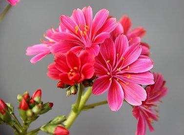 庭の花F IMG_0279 REVdownsize