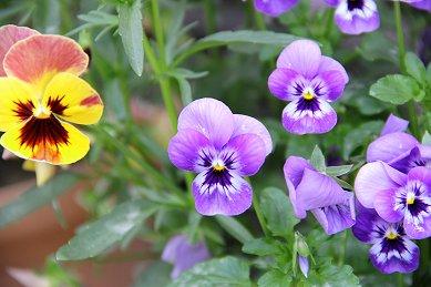 庭の花E IMG_0465 downsize